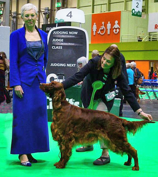 Babs crufts 2019 czapla